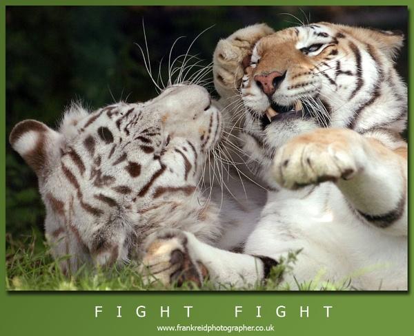 Fight Fight by Frank_Reid