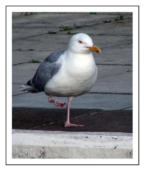 A seagull by willshot
