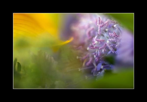 Color Blend by LisaRose