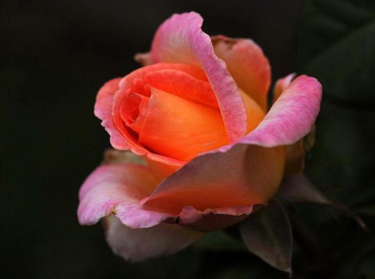 Orange appeal by HughP12