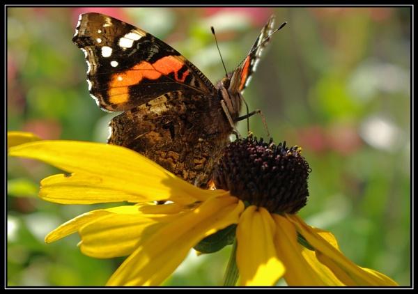 Butterfly by microchip