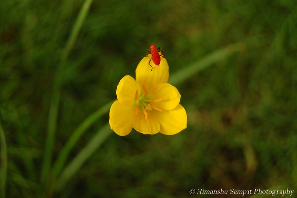 Colours of Nature by 2himanshu