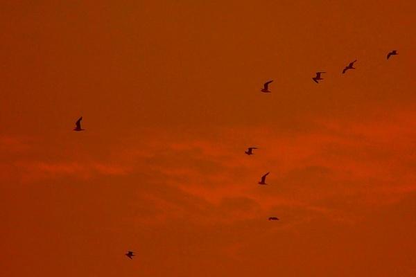 Flying into the Sunset by Prestidigitator