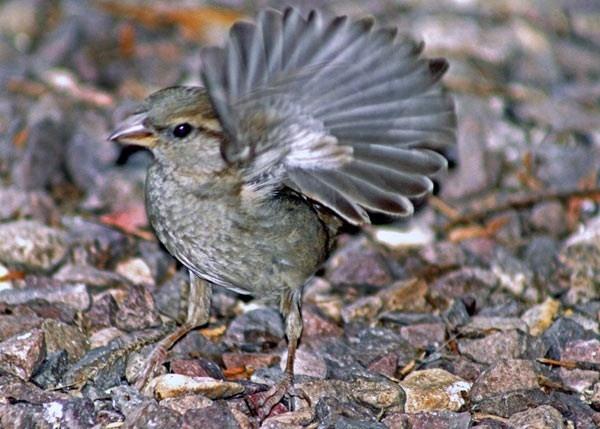 baby bird waving by ray_paul
