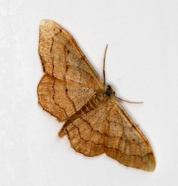 moth by chrisg7syt