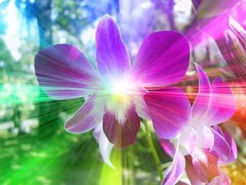 fantasy flors by geoffmilner