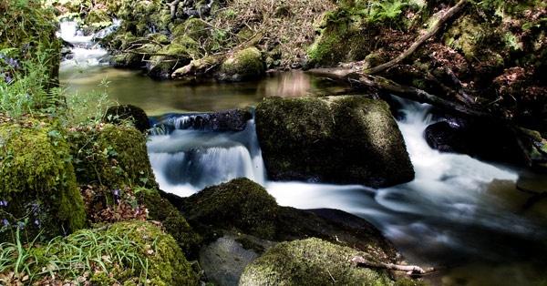 Woodland Falls by hattrick