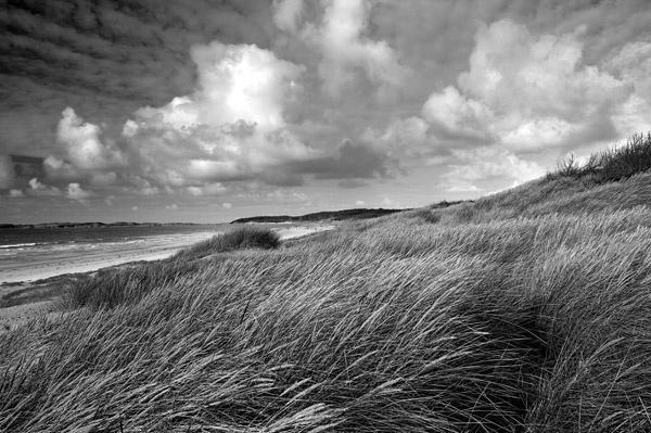 Marram Grass by celyn