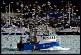 Spot the Seagull !