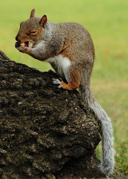 Mmmm.......Nuts! by Bradfleet12