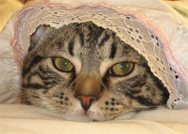Bill\'s Bonnet by dnwilliams