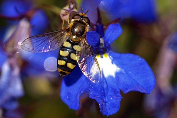 Big Bug by wheresjp