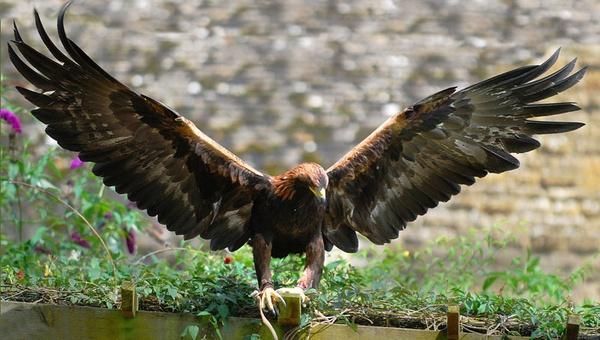 Поймать орла во сне