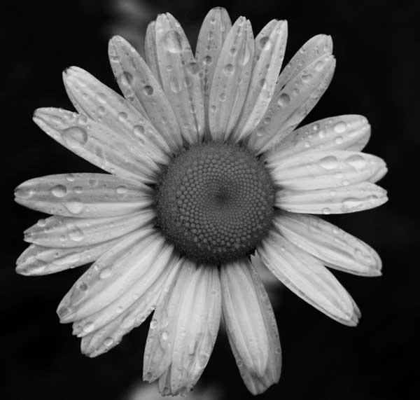 Daisy, daisy... by angelica_cab