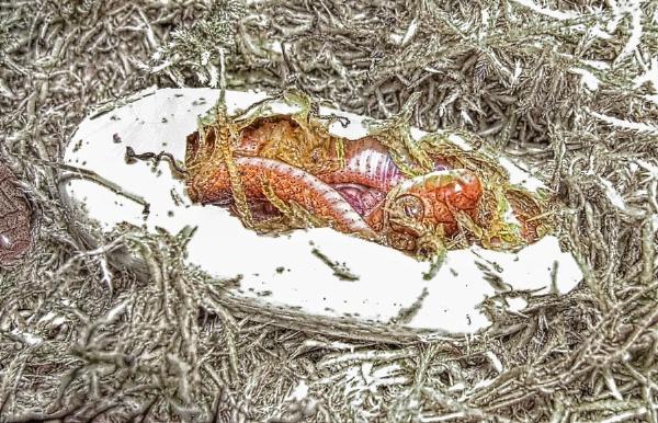 Life cycle of a Catsnake by Angi_Wallace