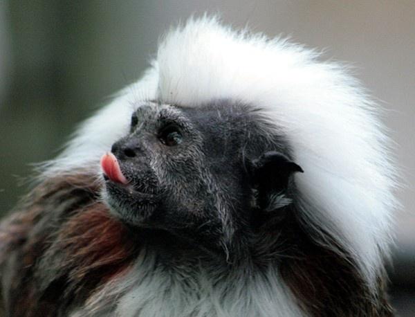 Cheeky Monkey!!! by jove