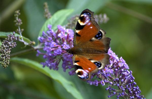 Utterly Butterfly by SugarDJ