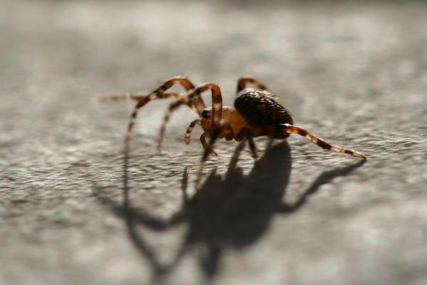 Walking Spider by fjchrystello