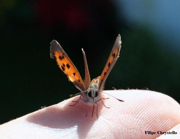 Butterfly by fjchrystello
