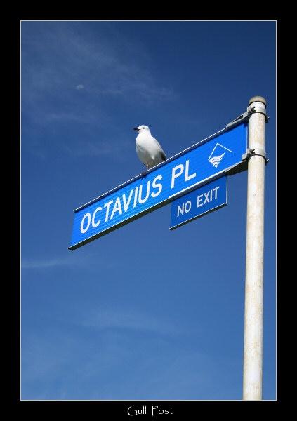Gull Post by SteveNZ