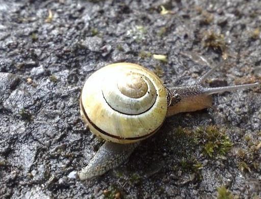 Urban Snail by rowejay