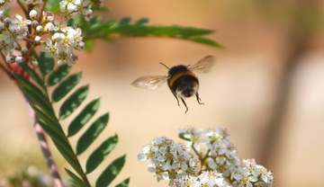 Buzzing around ! by jdmphotography
