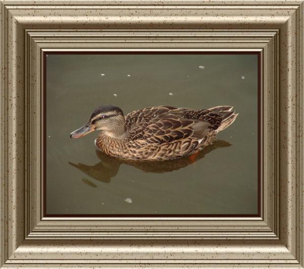 Mellard Duck by cad28