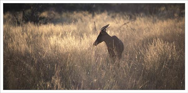 African dawn. by rontear