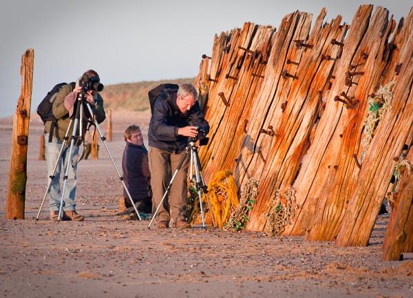 Togs at work by Steve Cribbin