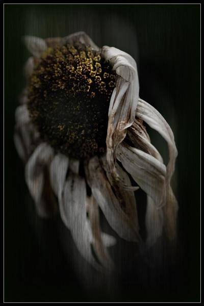 Beauty in Death by Morpyre