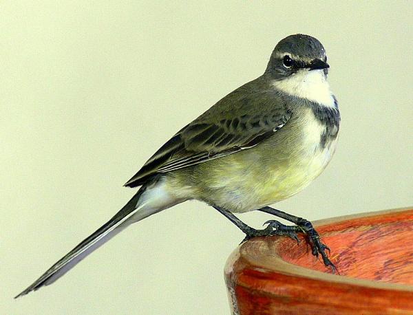 Friendly little Bird by georg