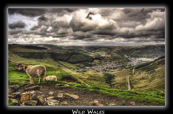 Wild Wales by jason_e