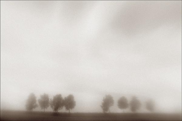 my 8 trees by bliba