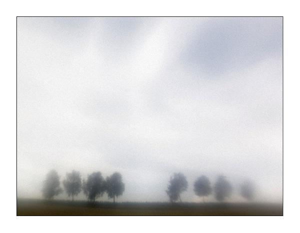 my 8 trees (part II) by bliba