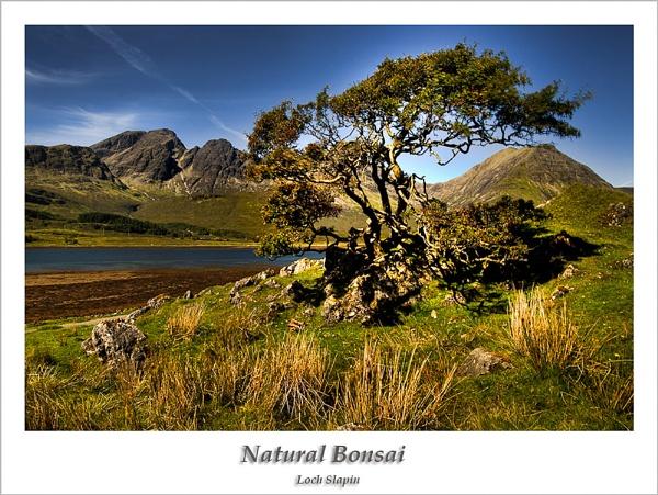 Natural Bonsai by Sue_R