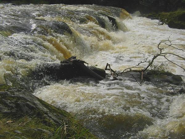 Cenarth Falls by Glostopcat