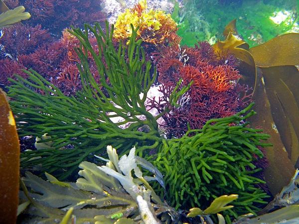 Seaweed colours by jonny250