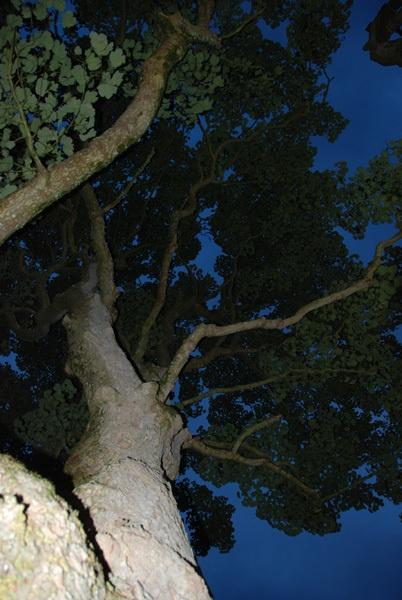 Tree by John45