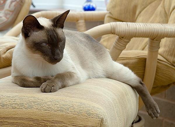 monty relaxing by joetcat