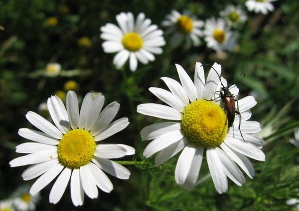 Pollination by kj_rajesh