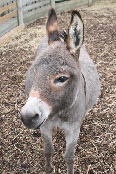 Friendly Donkey by Darragh