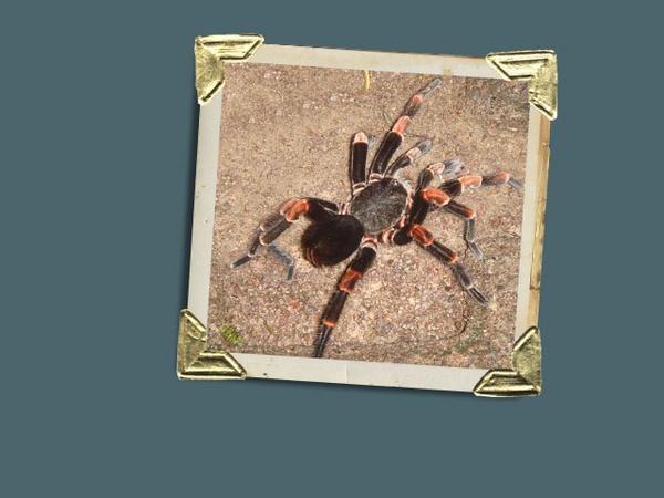 Big Spider!!!!!! by TinyBrad