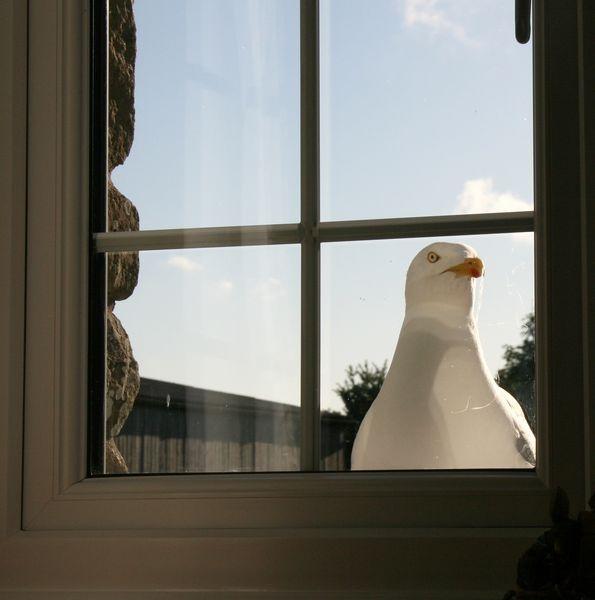 Gull Watch by Kevhan
