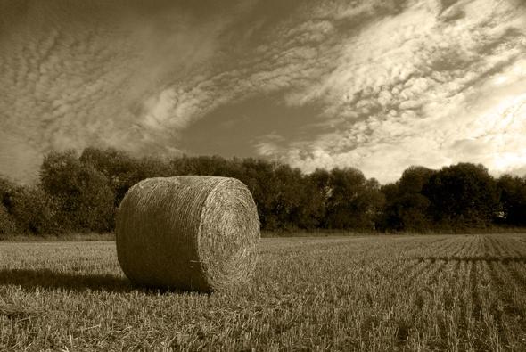 One Hay Bale by SugarDJ