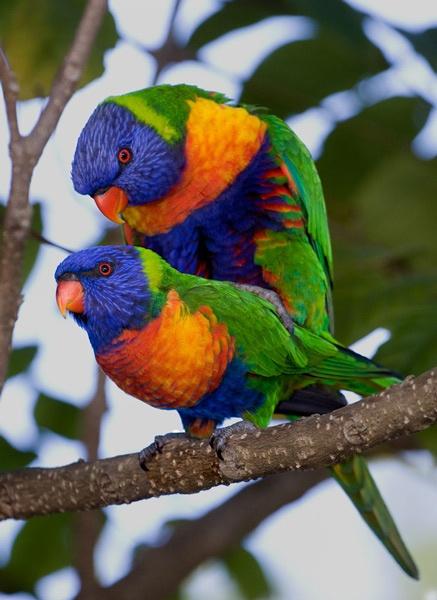 Bird Love by adamm