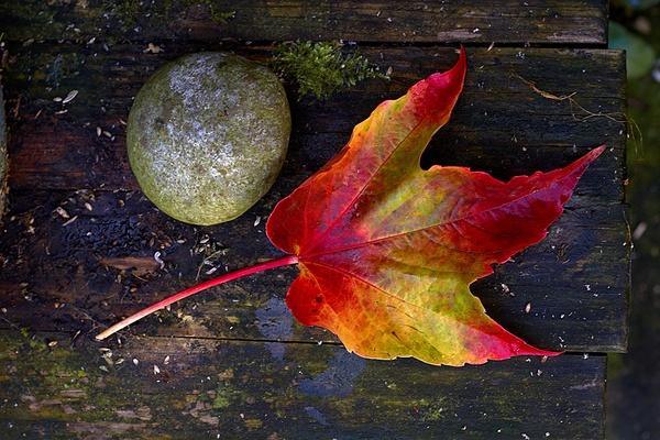 Fall(en) Colours by conrad