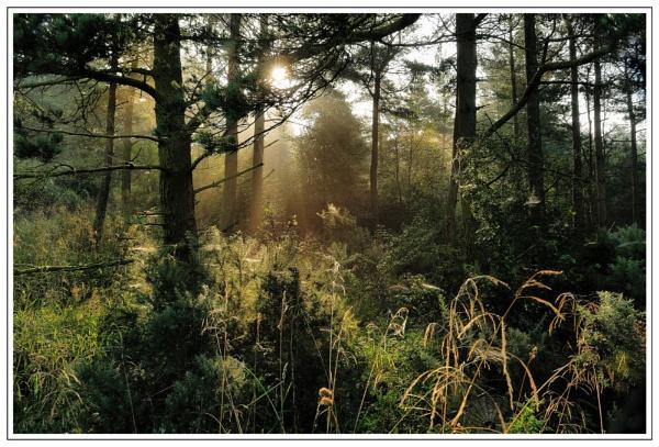 sunbeam\' & webs by dden