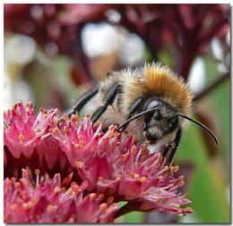 Bun`s bees