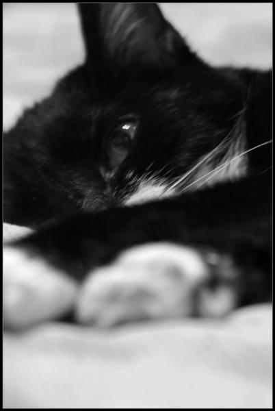 R.I.P Misty by DouglasLatham