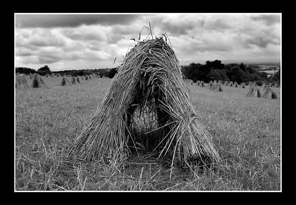 Haystack II by Lenz